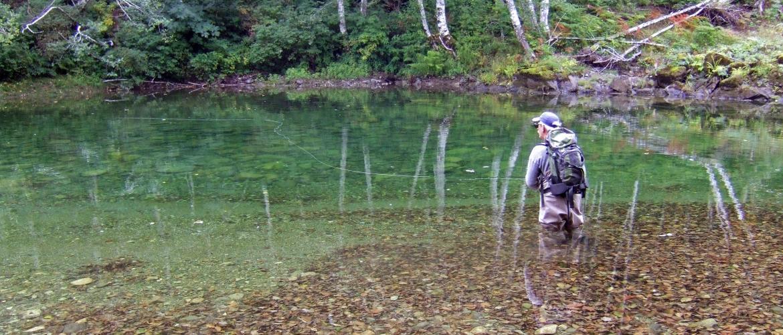 Doug Elliott birch reflection on Gordon River 2008